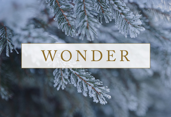"""Wonder"" article from Dr. Jeremiah"