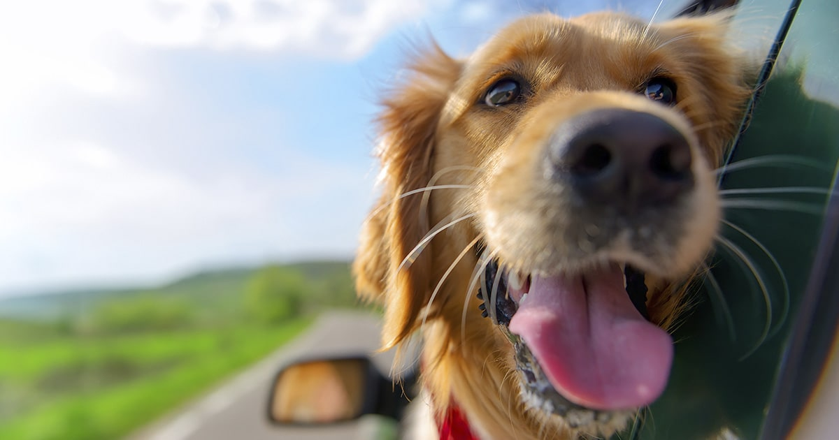 Do Dogs Go to Heaven? And Other Questions You've Wondered About Heaven