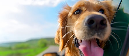 Find Out Now - Do Dogs Go to Heaven?