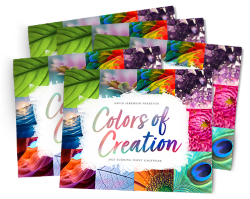 5-Pack: Colors of Creation 2021 Image